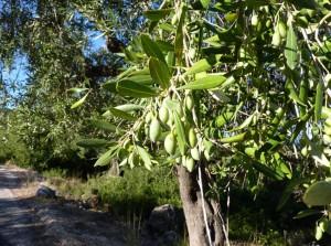 Frucht in Szene gesetzt