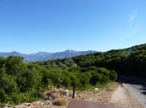 Hügellandschaft mit Olivenbäumen